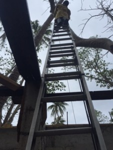 Josie on ladder